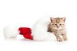 Фото рыжего котёнка для новогоднего оформления
