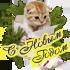 Новогодние котята (1)