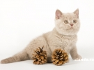 Новогодние котята (7)