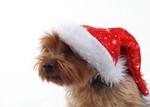 Новогодний пёс (2)