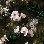 Ёлка из цветов  (7)