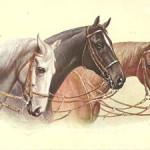 Открытки Лошади (3)