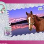 Открытки Лошади (5)