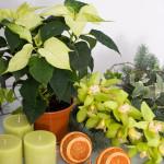 новогодние букеты с орхидеями (3)