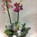 новогодние букеты с орхидеями (8)