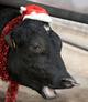 Новогодняя корова (6)