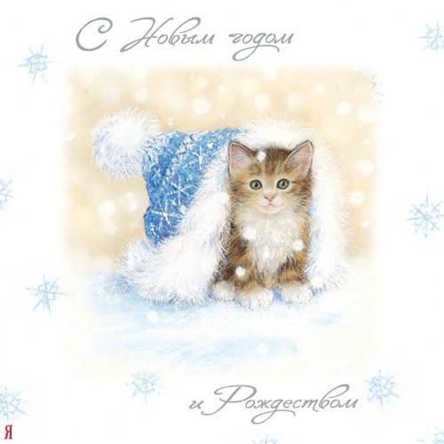 новогодний котёнок