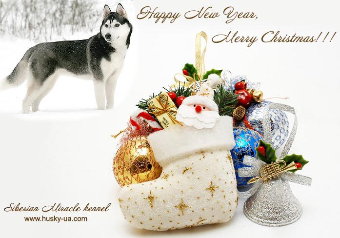 new-year-dog (10)