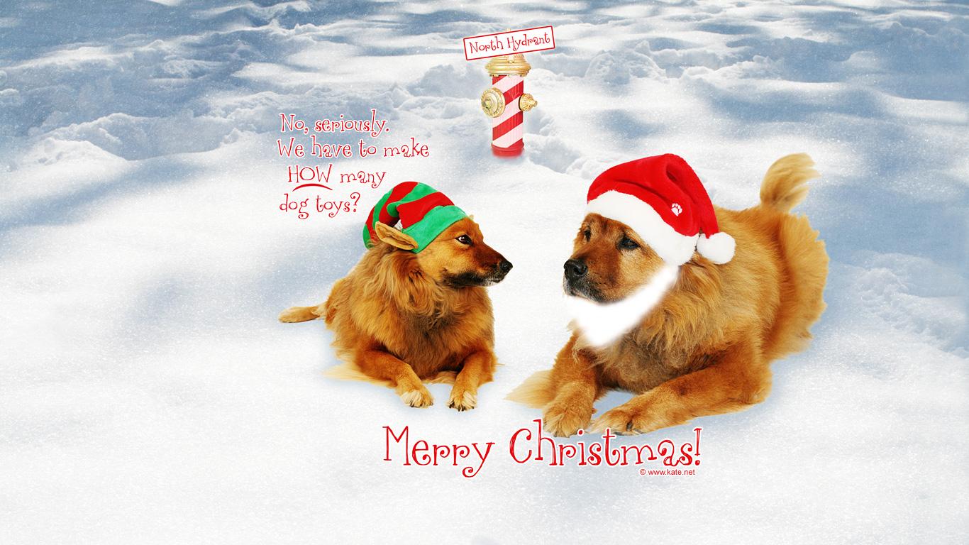 new-year-dog (7)