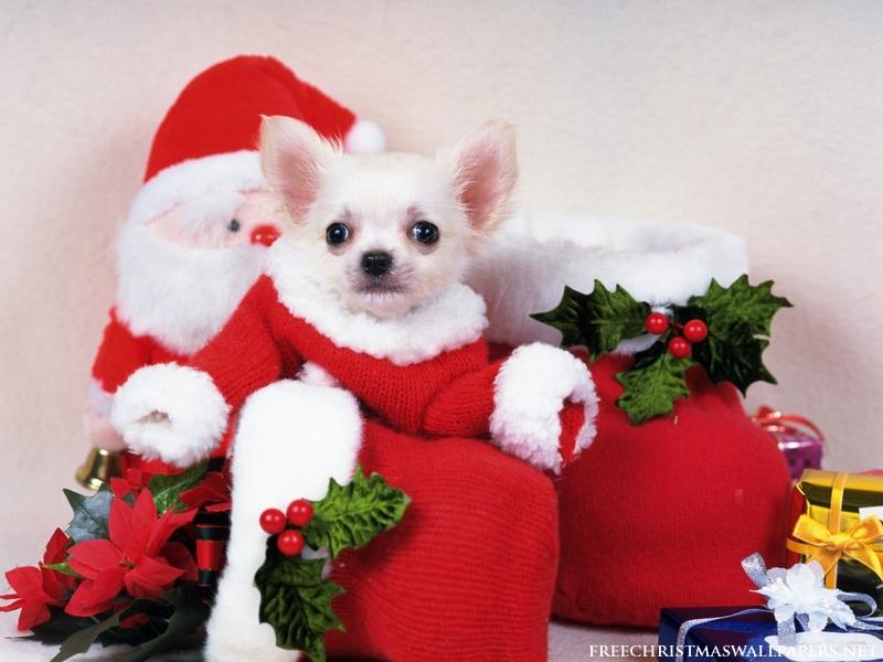 new-year-dog (9)