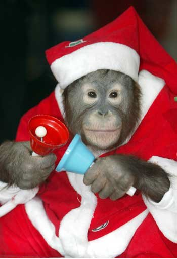 как справить год обезьяны