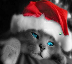 Дымчато-серый котёнок в красно-белом клпаке