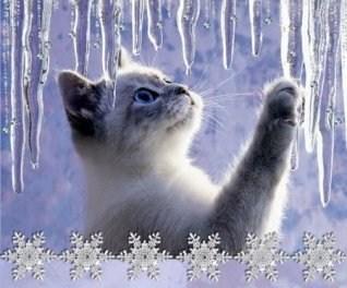 Новогодняя открытка с милым котёнком.