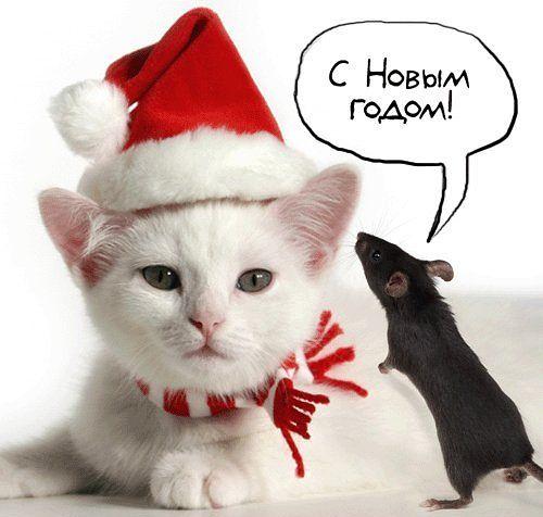 Новогодние открытки с кошками (2)