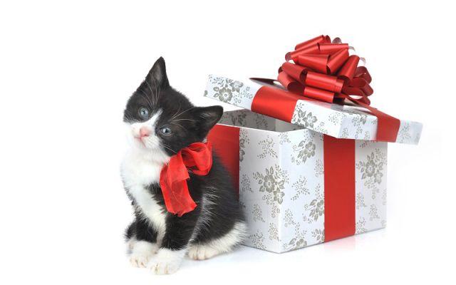 Новогодние открытки с кошками (4)