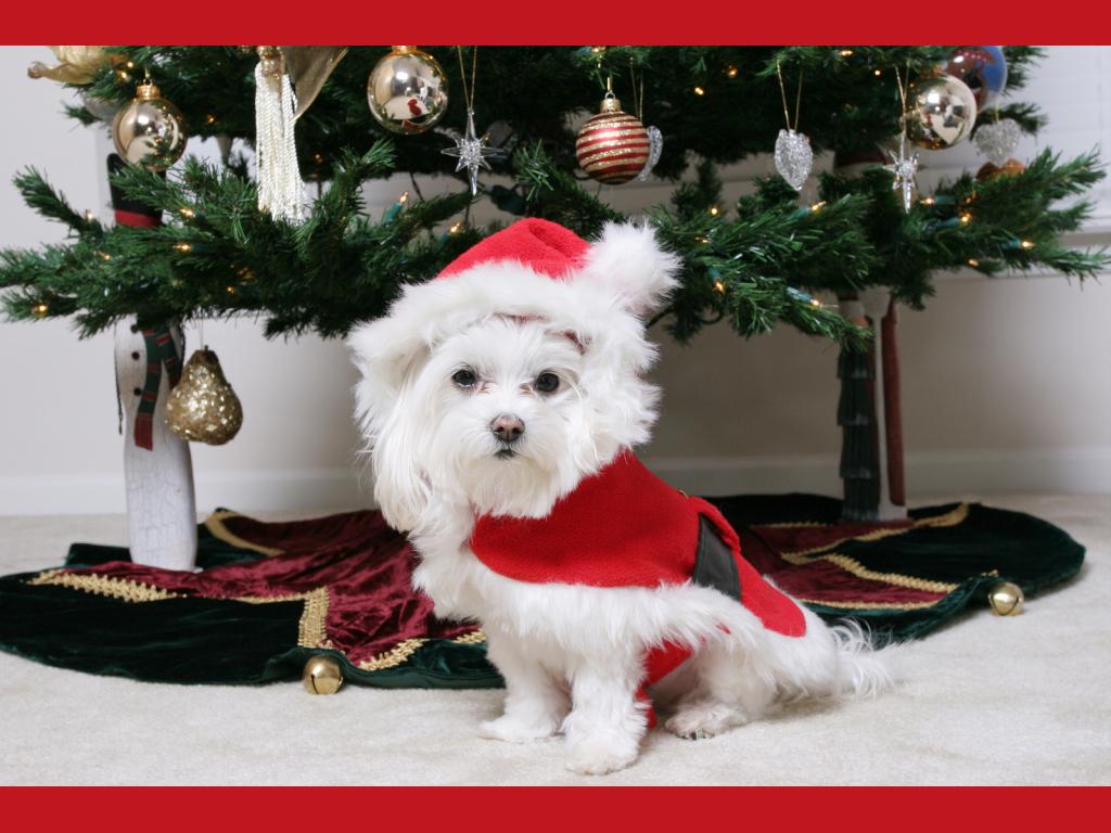 new-year-dog (2)