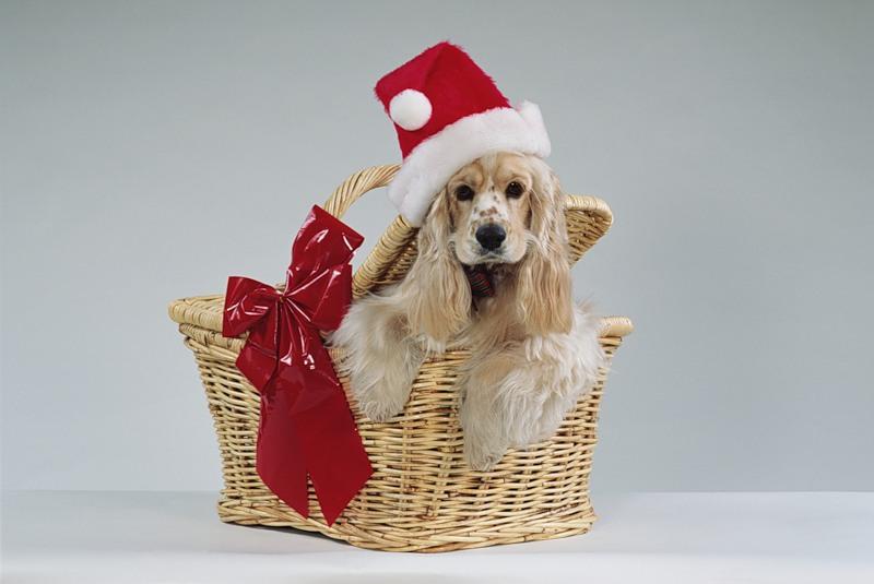 new-year-dog (3)