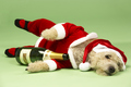 new-year-dogs (1)
