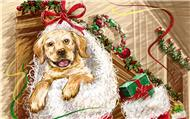 new-year-dogs (3)