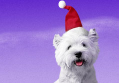new-year-dogs (6)