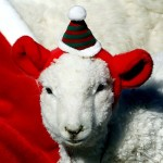 A sheep wears a Christmas costume during an event for the holiday season at the Everland amusement park in Yongin
