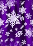 violet-new-year (1)