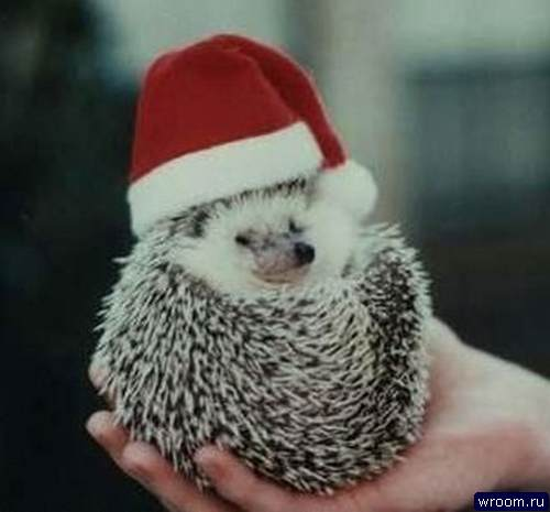 new-year-hedgehog (2)